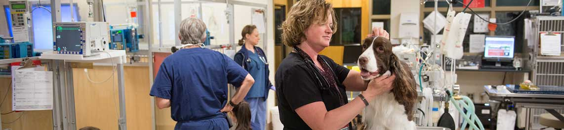 Online Veterinary Medicine programs offered through CSU OnlinePlus