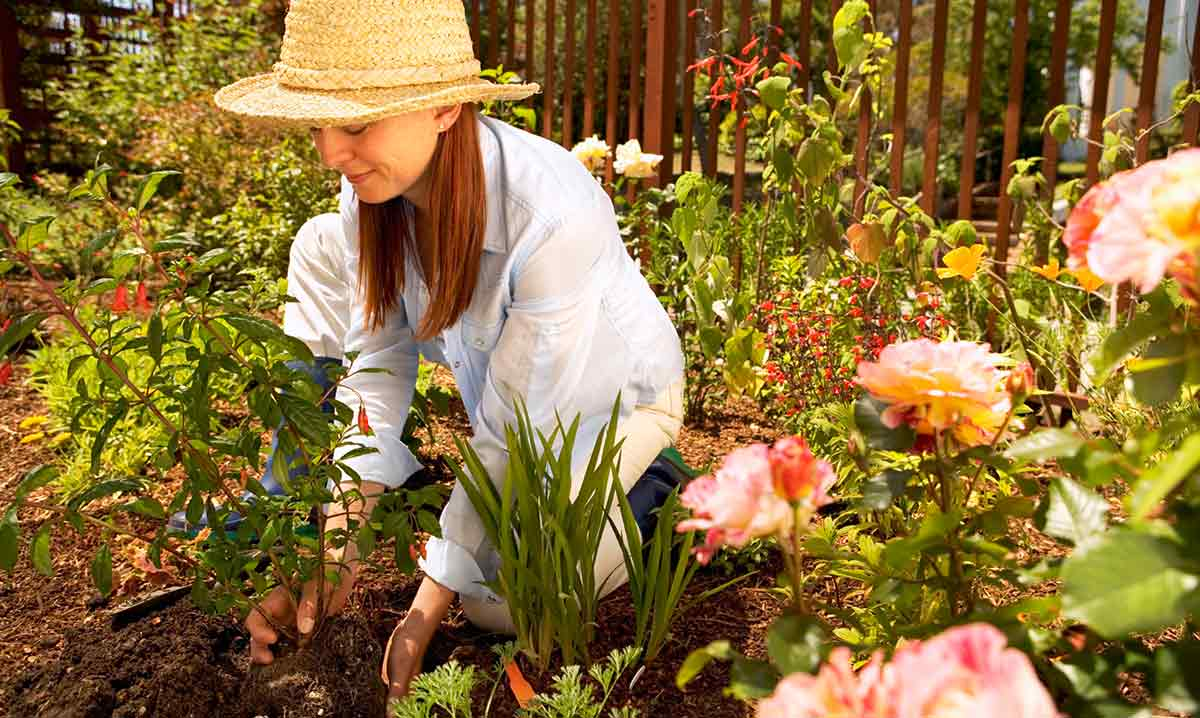 Online Certified Gardener Classes Digital Badge Program